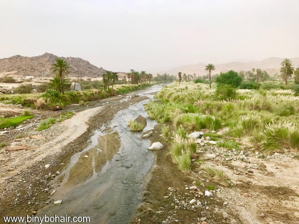 """بالصور ..وادي قنونا"""" نخيل وغدير 3ln46496.jpg"""