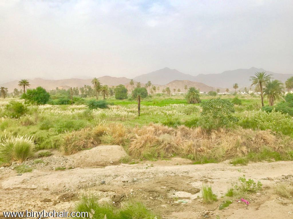 """بالصور ..وادي قنونا"""" نخيل وغدير 40g46496.jpg"""