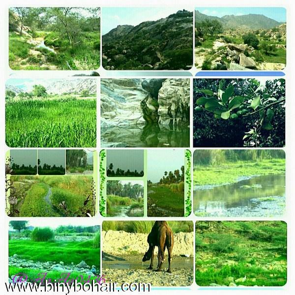 """مناظر للطبيعة في"""" بلاد بحير""""احدى 98l77552.jpg"""