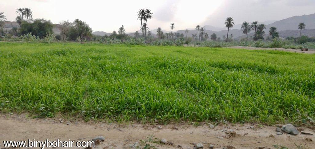 مزارع حوزت الحمظه وادي قنونا alh77625.jpeg