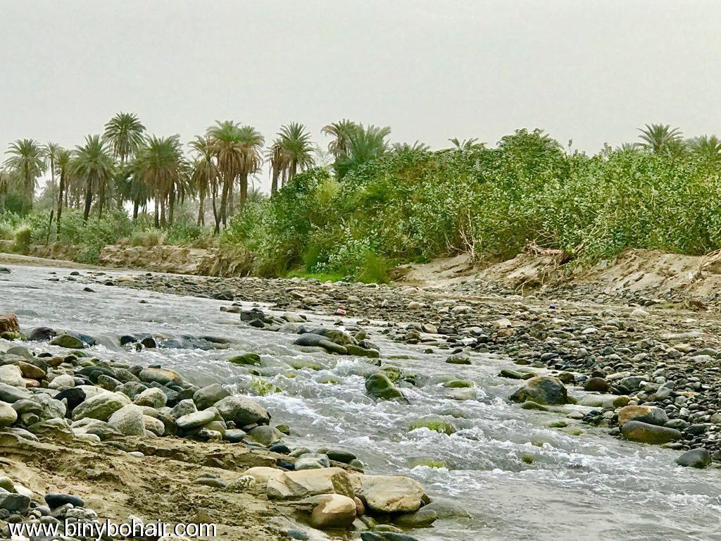 "بالصور ..وادي قنونا"" نخيل وغدير e7k46085.jpg"