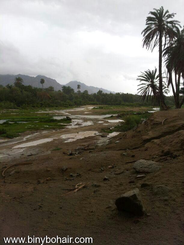 صور--- امطار وسيول{ وادي قنونا ewt15990.jpg