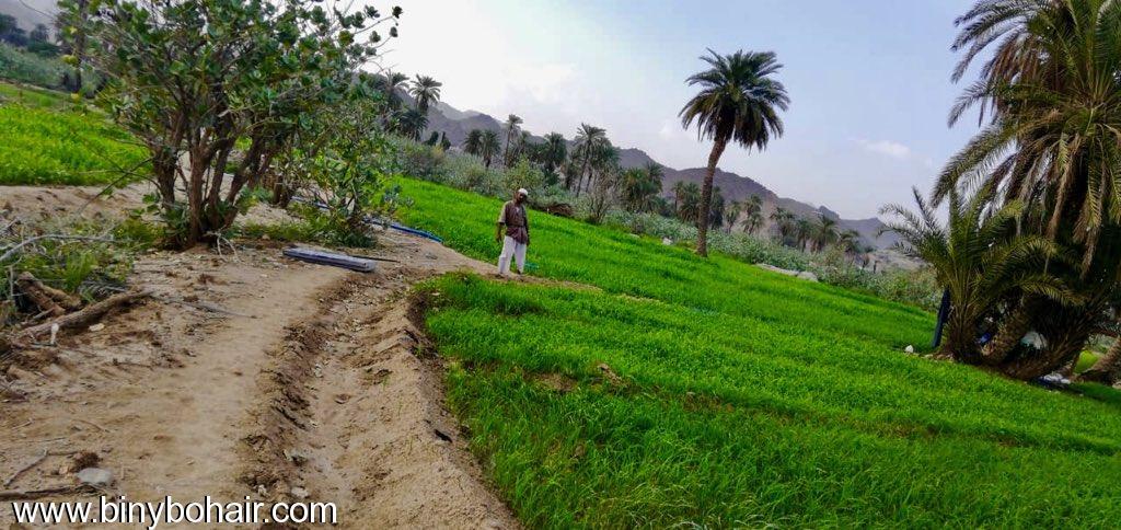 مزارع حوزت الحمظه وادي قنونا fbc77625.jpeg
