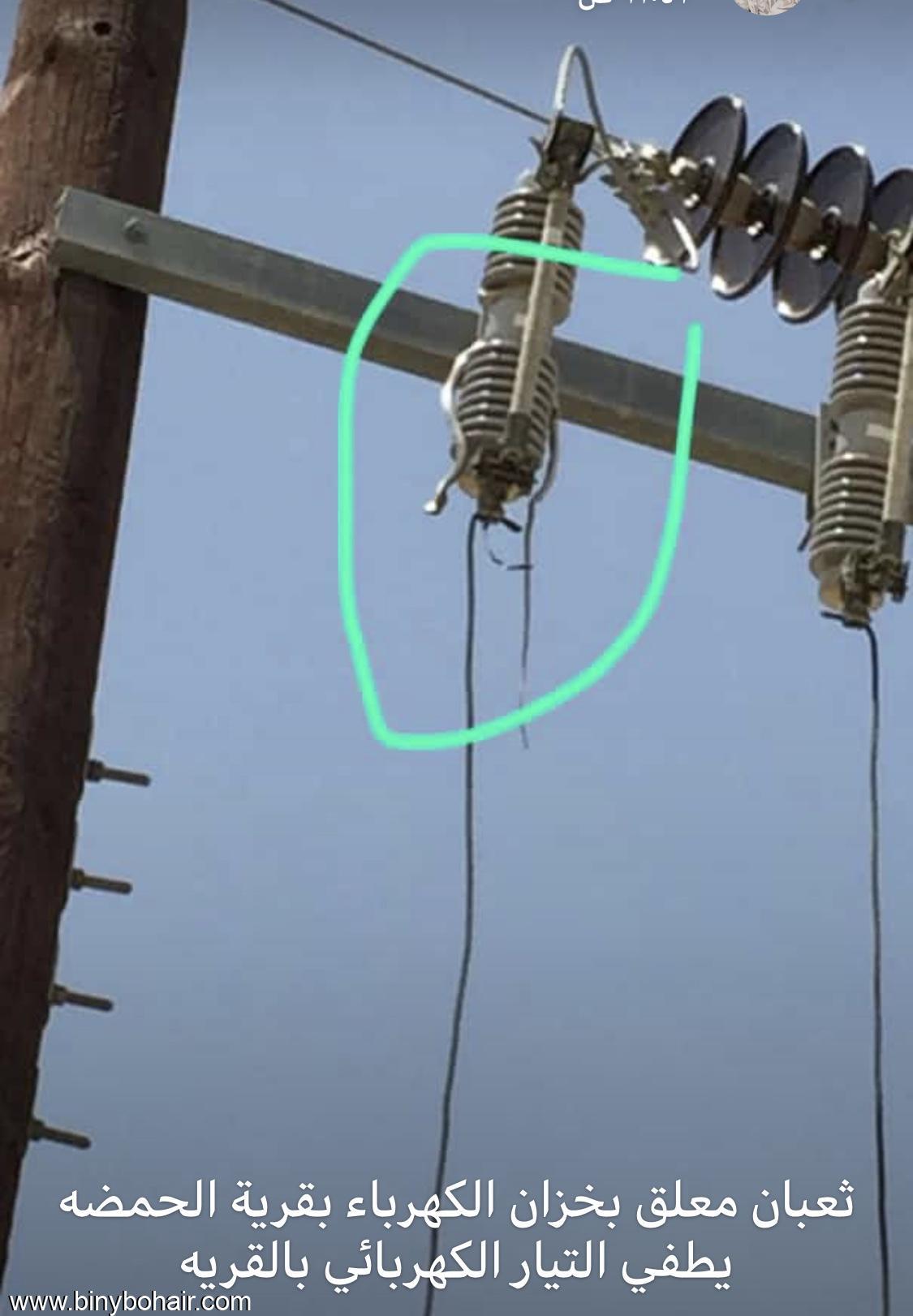 افعى يتسبب الكهرباء قرية الحمظة ilp38403.jpeg