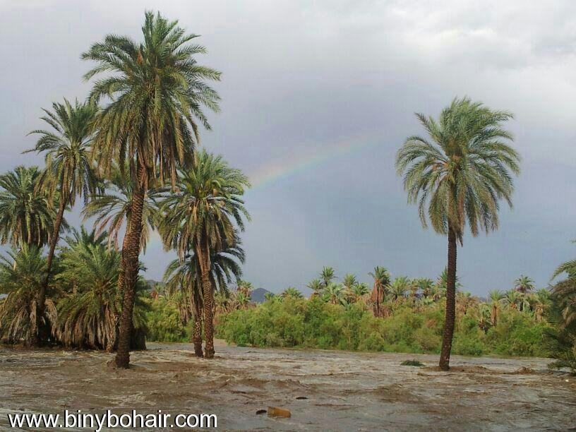 صور--- امطار وسيول{ وادي قنونا nyt15990.jpg