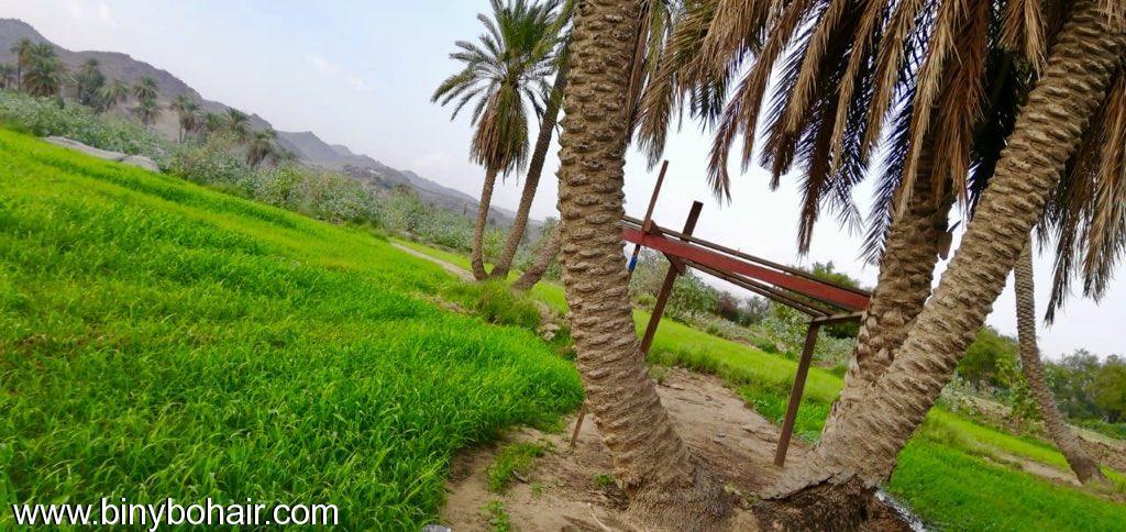 مزارع حوزت الحمظه وادي قنونا rch77625.jpeg