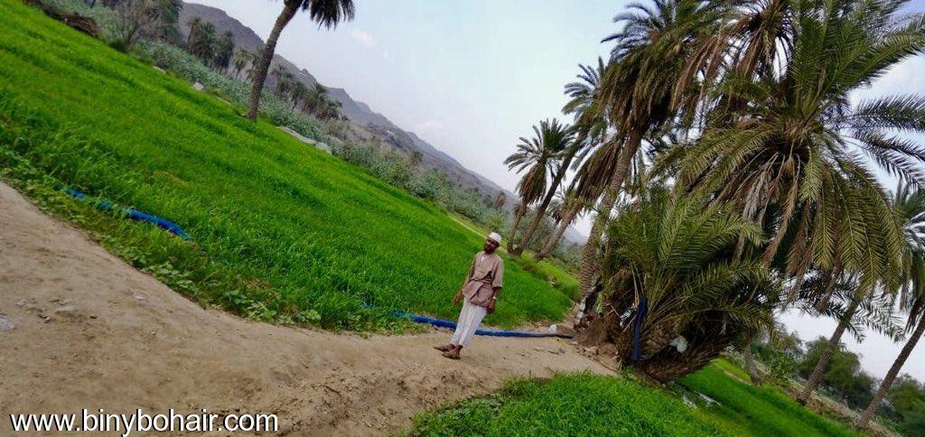 مزارع حوزت الحمظه وادي قنونا rnc77625.jpeg