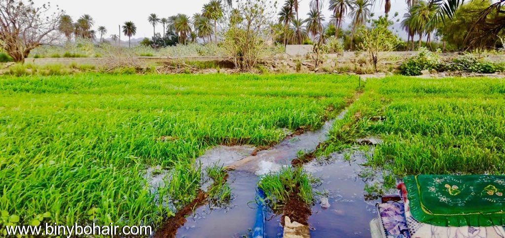 مزارع حوزت الحمظه وادي قنونا s3j77625.jpeg